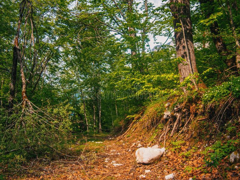Path in green mystical forest. Beautiful nature. Morning walk.  stock photos