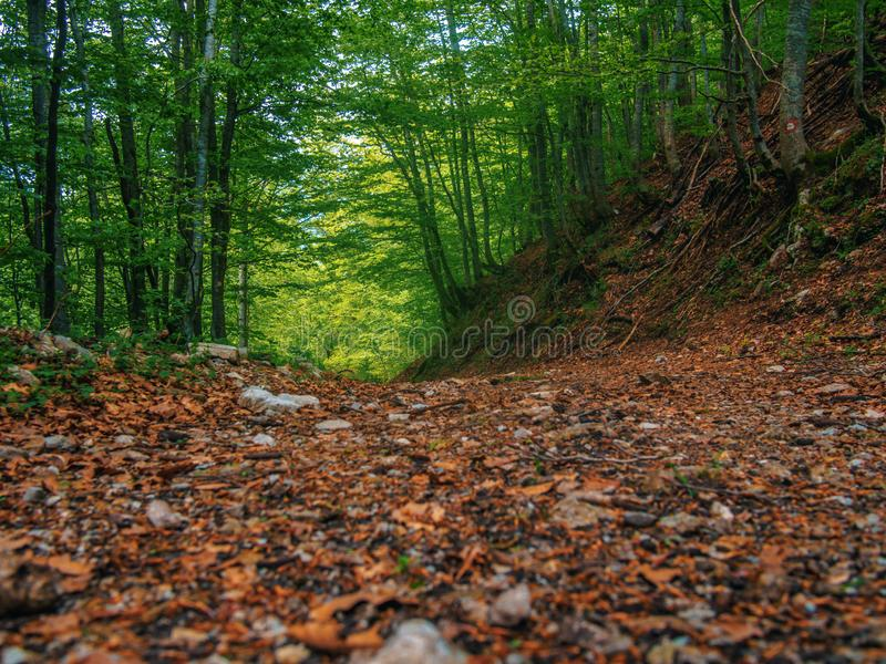 Path in green mystical forest. Beautiful nature. Morning walk.  royalty free stock photography