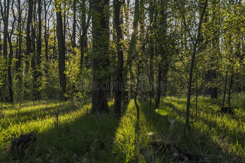 Path between Hodonin and Ratiskovice towns. In spring sunny evening royalty free stock image