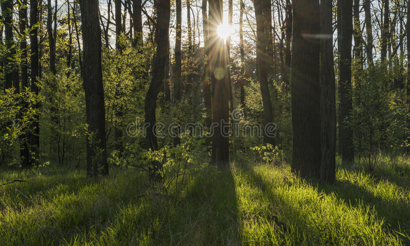 Path between Hodonin and Ratiskovice towns. In spring sunny evening stock photo