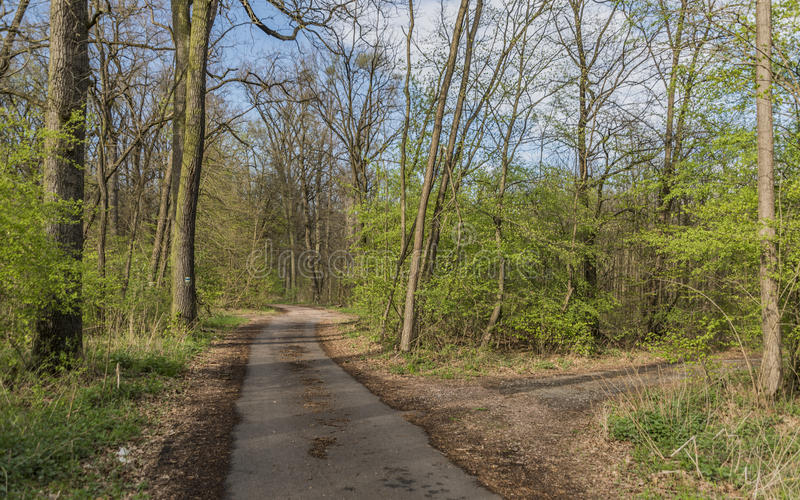 Path between Hodonin and Ratiskovice towns. In spring sunny evening royalty free stock photo