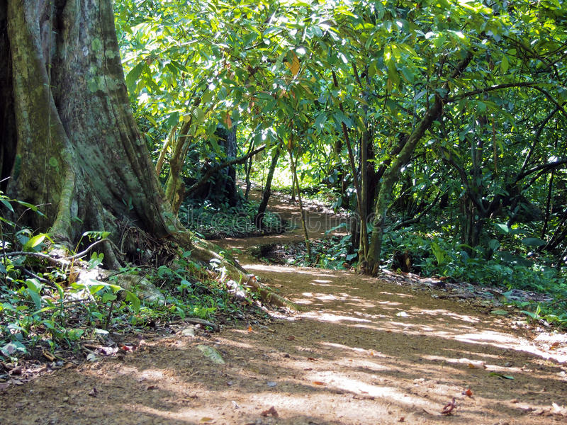 Download Path in the jungle stock photo. Image of curved, outdoor - 19482740