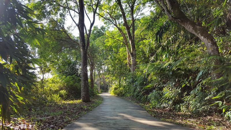 A path in the jungle stock image