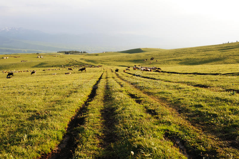 Download Path in kalajun grassland stock image. Image of backgrounds - 32590521