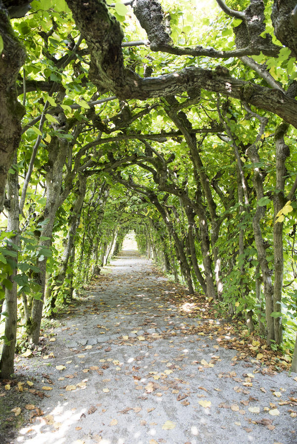 Way in Labyrinth. Alley with aborted branches in labyrinth royalty free stock photography