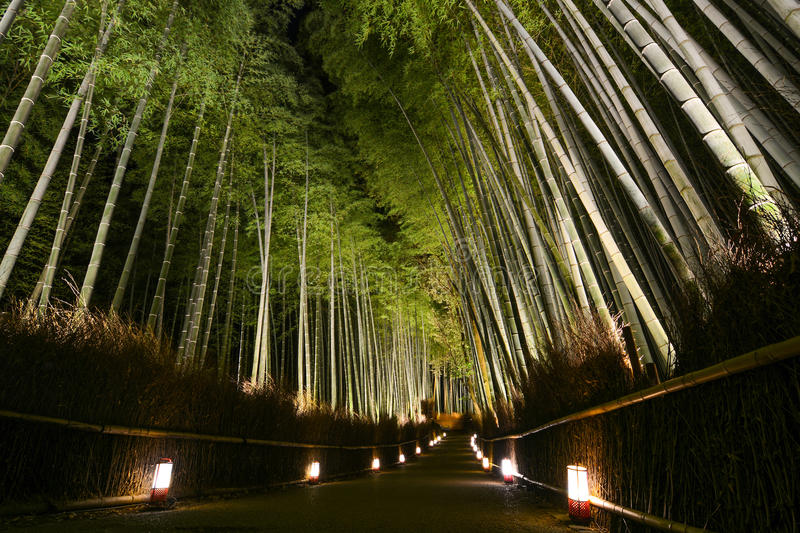Path of lanterns in a bamboo forest for the night illumination festival in Kyoto, Japan. Thick bamboo forest at night illuminated by a pathway of glowing stock photos