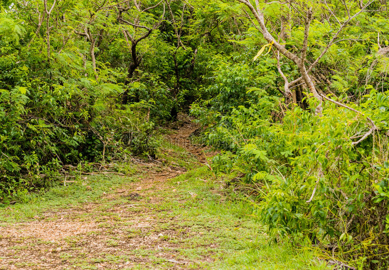 Path leading into dense jungle. At public hiking area on Guam stock image