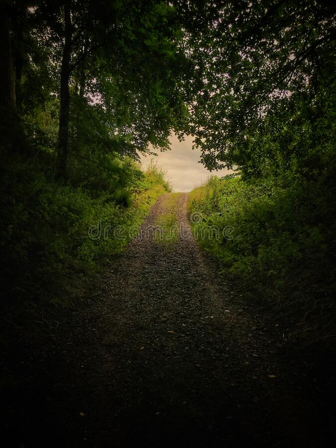A Path Leading Out Of The Forest Stock Photo - Image of environmental,  leaves: 196538192