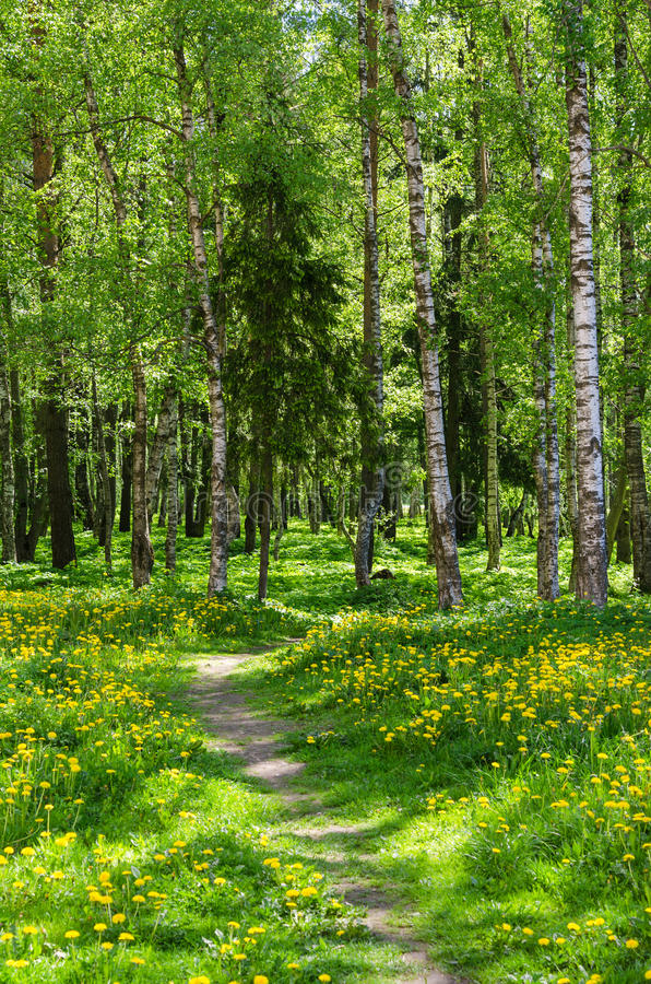 The path leading into spring forest royalty free stock photo