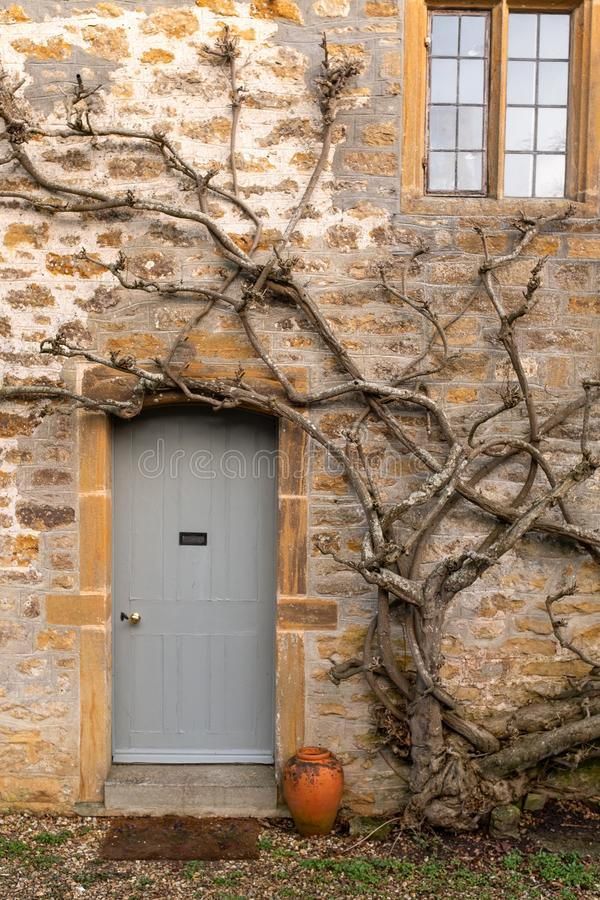 A path leading up to the front door of a traditional English cottage. A non flowering wisteria to one side stock photos