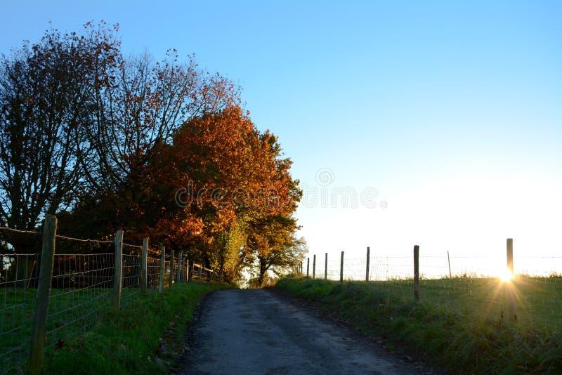 Path leading uphill to sunlit autumn trees at sundown royalty free stock photo