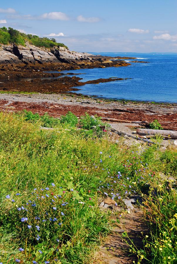 Wildflowers on a rocky coast stock images