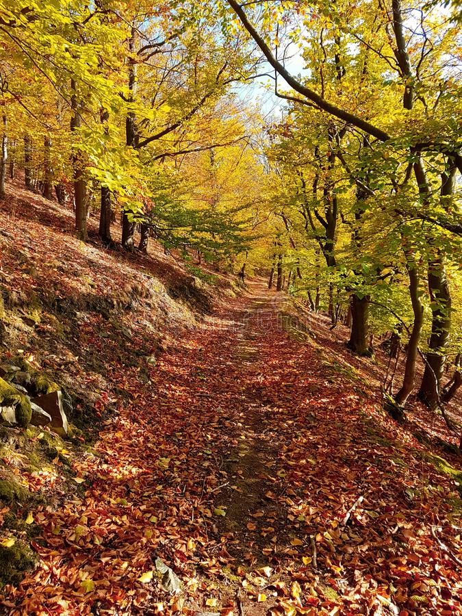 Path of leaves in a beautiful colored forest in autumn. Path of leaves in a beautiful  forest in, sky, magic, magical, light, shadow, sun, fall, season royalty free stock image