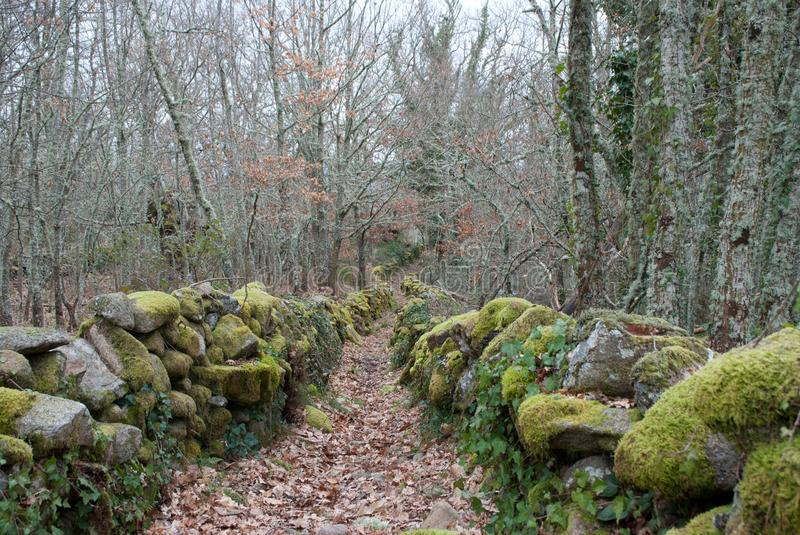 Path with leaves in woods in Autumn. A path going through the woods with leaves on ground and moss on rocks in Autumn stock photography