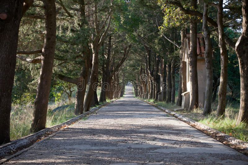 Path lined with trees. On a winter day royalty free stock image