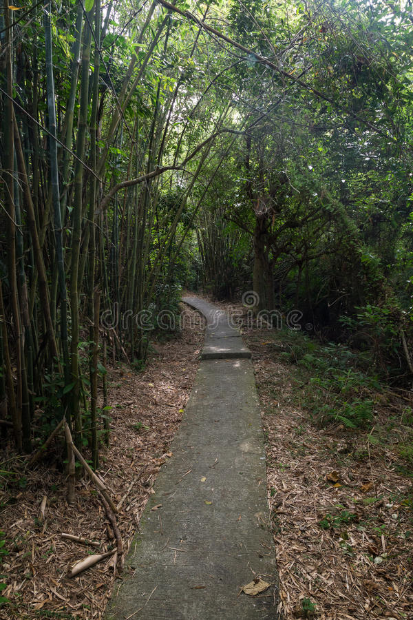 Path in a lush bamboo forest in Hong Kong. Nobody at a paved path in a lush bamboo forest on the Lamma Island in Hong Kong, China royalty free stock photo