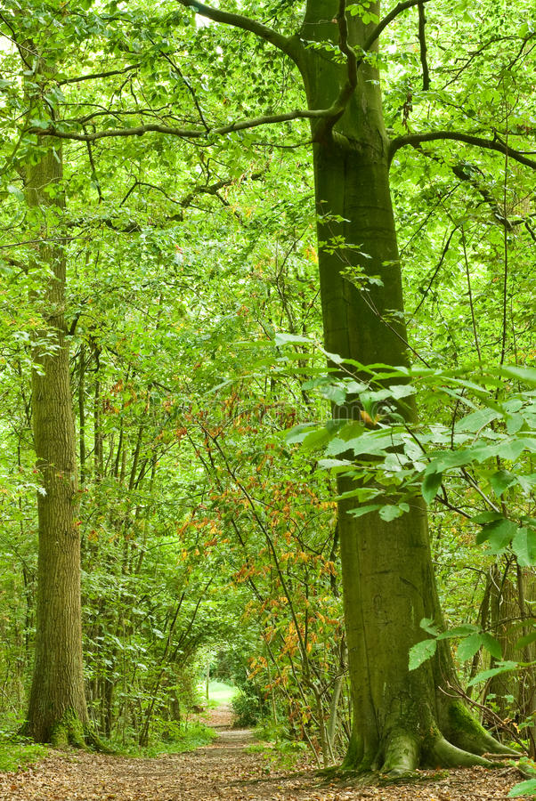 Download Path through lush forest stock photo. Image of daylight - 11164286