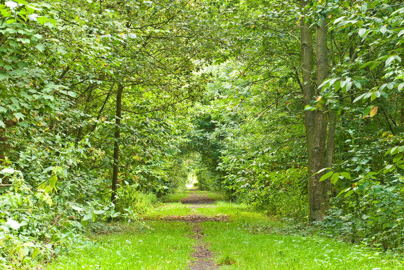 Download Path through lush forest stock image. Image of light - 11164331