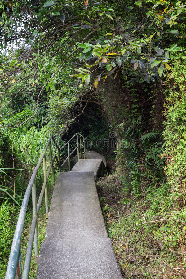 Path in a lush forest in Hong Kong. Nobody at a paved path in a lush forest on the Lamma Island in Hong Kong, China stock photo