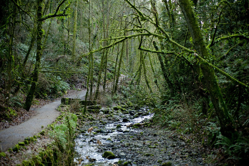 Download Path through lush forrest stock image. Image of explore - 23969297