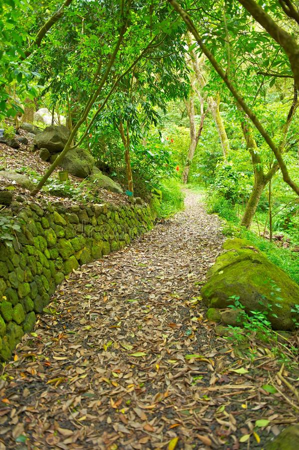 Path Through Lush Green Trees stock image