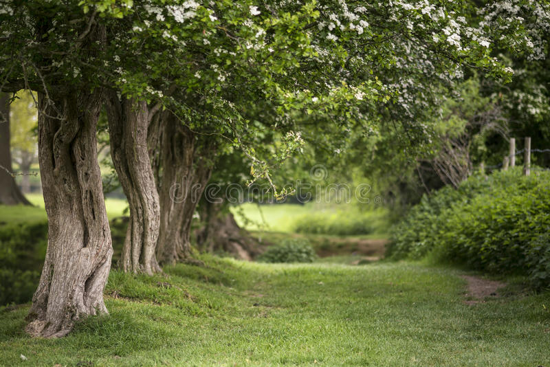 Path through lush shallow depth of field forest landscape in Eng. Path through vibrant shallow depth of field forest landscape in English countryside in Spring royalty free stock photos