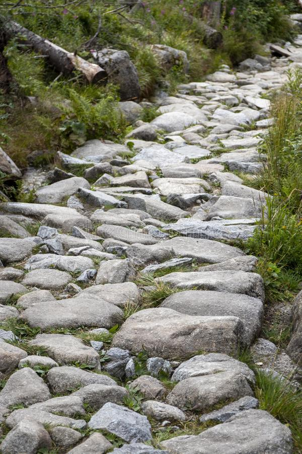 A path made of stones in the forest. High Tatras, Slovakia. N stock image