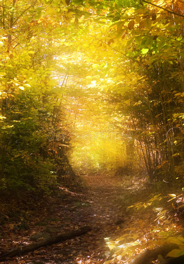 Path through the magic forest royalty free stock photos