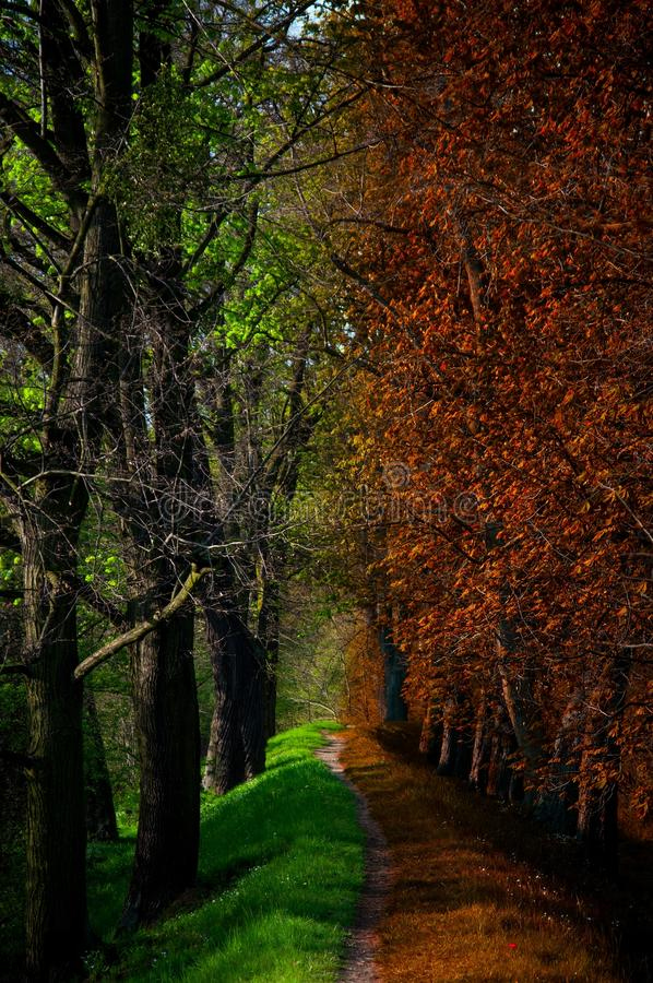 Path in Magic forest, summer and autumn royalty free stock images