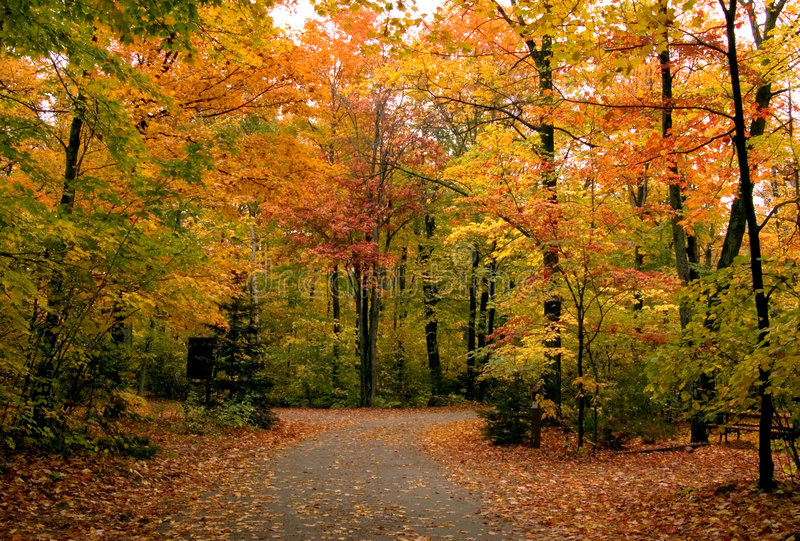 Path in maple forest royalty free stock photography