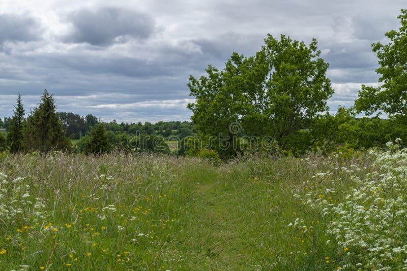 Path through meadow stock image