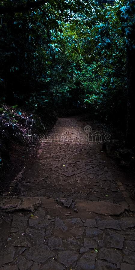Path in the middle of a jungle royalty free stock photography