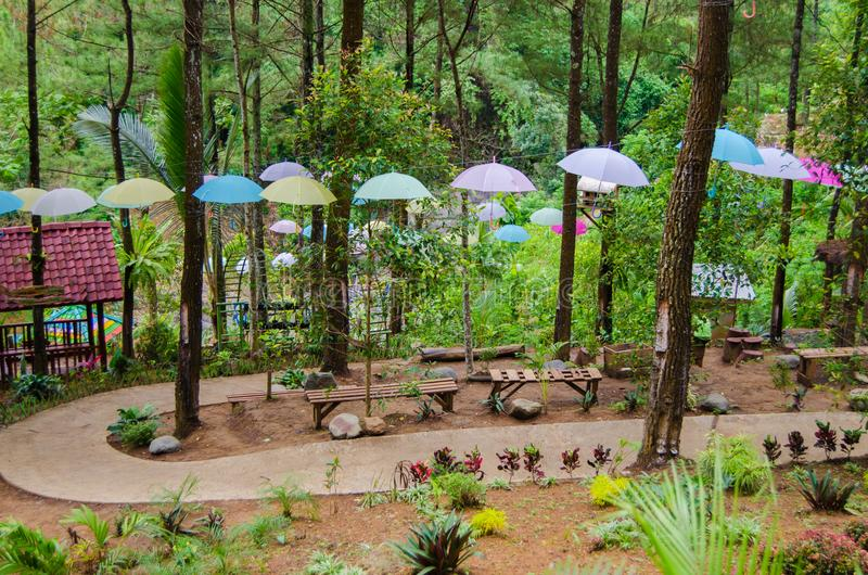 Umbrella and Path in the middle of pine forest. Umbrella Path in the middle of pine forest at putri maron park, Trenggalek Indonesia. this is a park in the royalty free stock photos