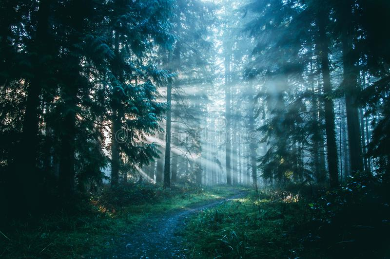 Path through a misty forest with sunbeams through the trees stock photo