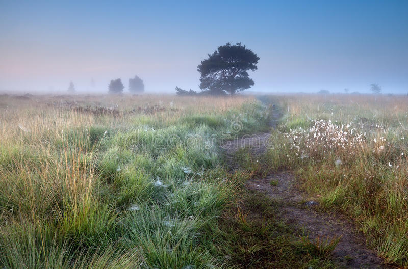 Path in misty summer morning royalty free stock photography