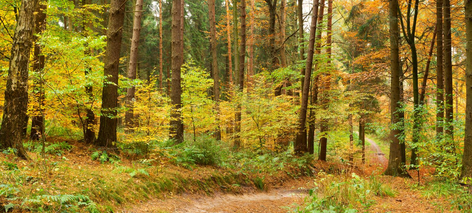 Path in mixed autumn forest. Panorama of a path in a mixed autumn forest with colorful deciduous trees and conifers royalty free stock photos