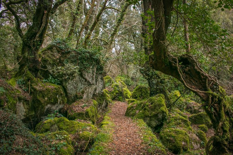 Path in the monumental forest of Sasseto, Lazio, Italy stock photography