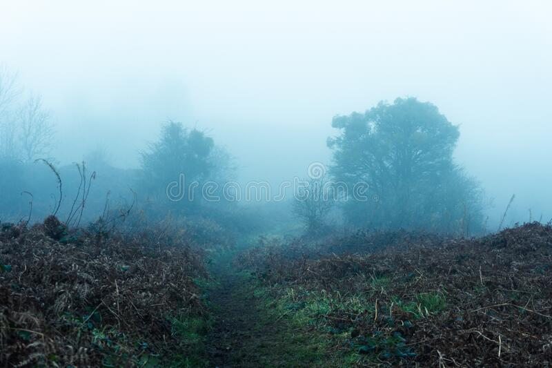 A path through moorland on a moody, dark, foggy, winters day.  royalty free stock image
