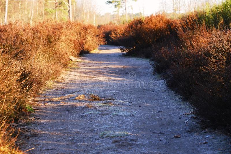 Path and in moorland sunlight. Landschape with walking path in belgian europe moorland sunny day winter countryside adventure royalty free stock images