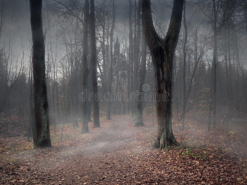 A path through a mystical misty forest royalty free stock photos