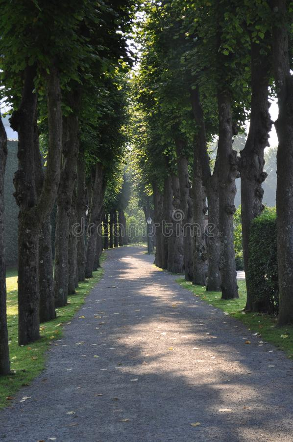 Lit Tree Lined Path royalty free stock photos