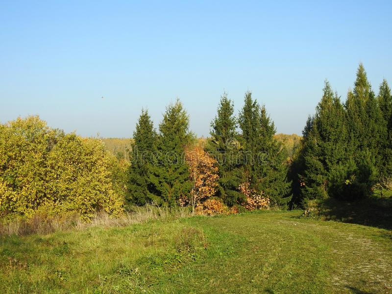 Path and beautiful autumn trees, Lithuania. Path and nice fir and pine trees in autumn royalty free stock photos