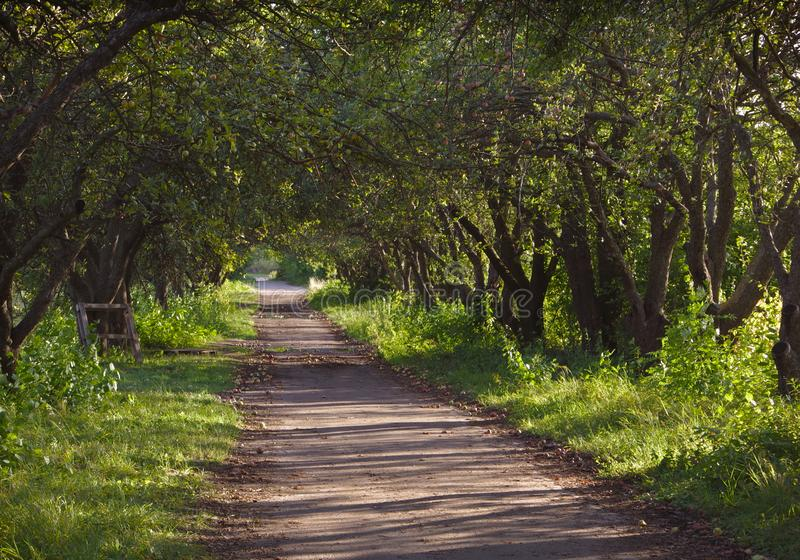 Path in the apple orchard. royalty free stock image