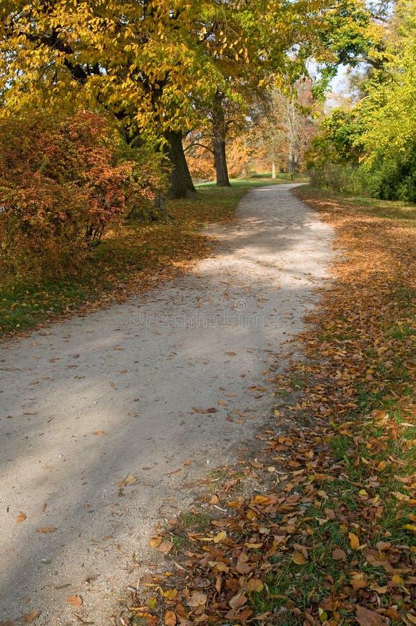 Path through the park. Path through the yellow autumn park stock photo