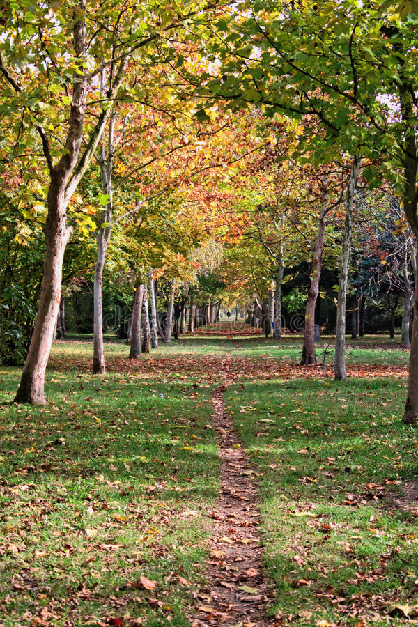 Path in the Park. Dirt path through the trees at the park royalty free stock photography