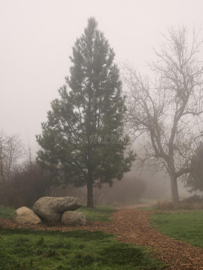 A path through a park on a foggy day. A wood chip path through a park on a foggy day. With a pine tree and a bare branched tree and large rocks in winter royalty free stock image