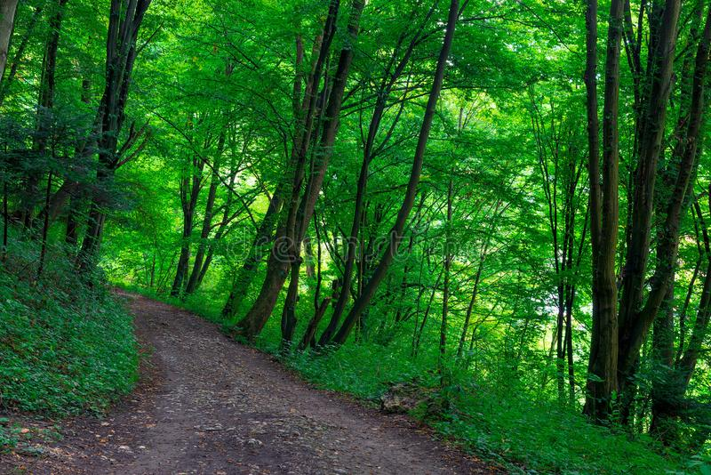 path in the park, green trees stock image