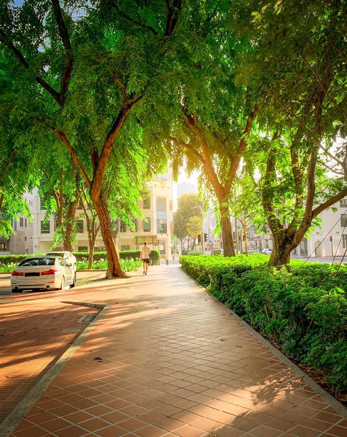 Path in park beside the road in the city. Green tree in garden in the morning. Car parking area for rental in Singapore. A man. Walking on pathway. Urban royalty free stock image