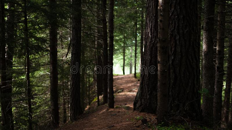Path in the peaceful forest stock photos
