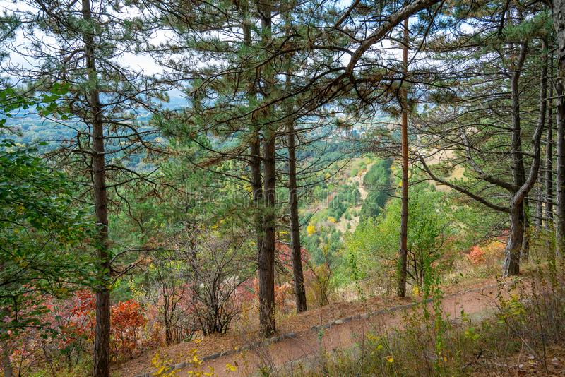 Walkway in a pine forest. Autumn landscape from the Resort Park in Kislovodsk, Russia. Path in a pine forest, beautiful view on the side of the mountains. Autumn stock photo